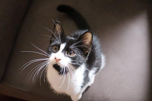 Www čierna mačička obrázky com
