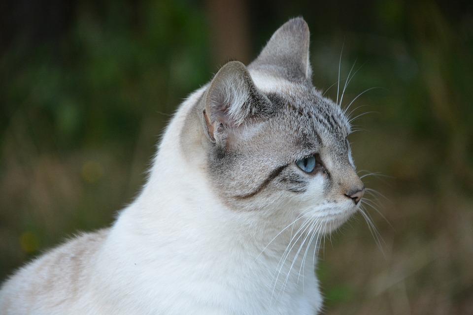 dievča mačička Foto mladý mladý nahé