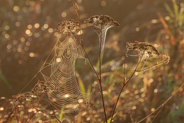 u003cbu003eNatureu003c/bu003e Conservation Spring Lake - Free photo on Pixabay