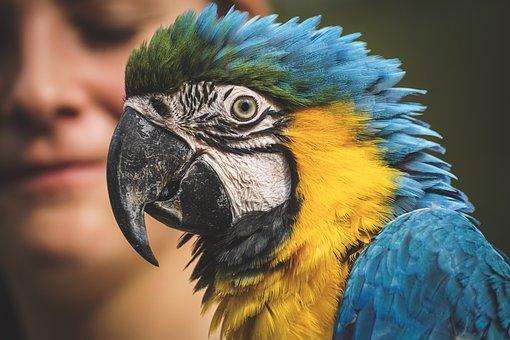 Ara, Parrot, Animal World, Yellow Macaw