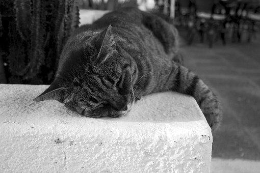 Zadarmo zadok a mačička videá