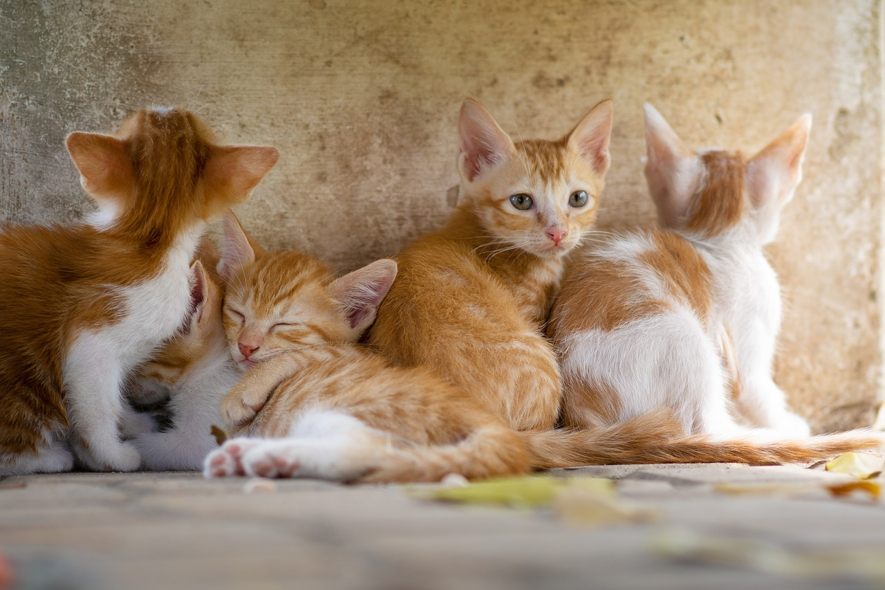 Can young cats get cancer