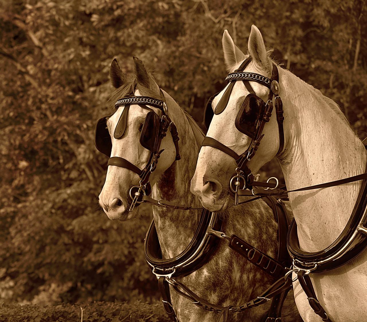 Sepete At Koşumlu Gözlüğü - Pixabay'de ücretsiz fotoğraf