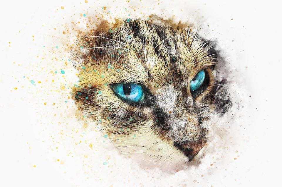 Download 93+  Gambar Kucing Emosi Paling Imut