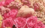 róże, serce, szlachetne róże