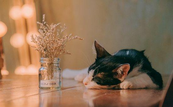 Stiahnite si zdarma ohromujúce obrázky o Spiace Mačka.