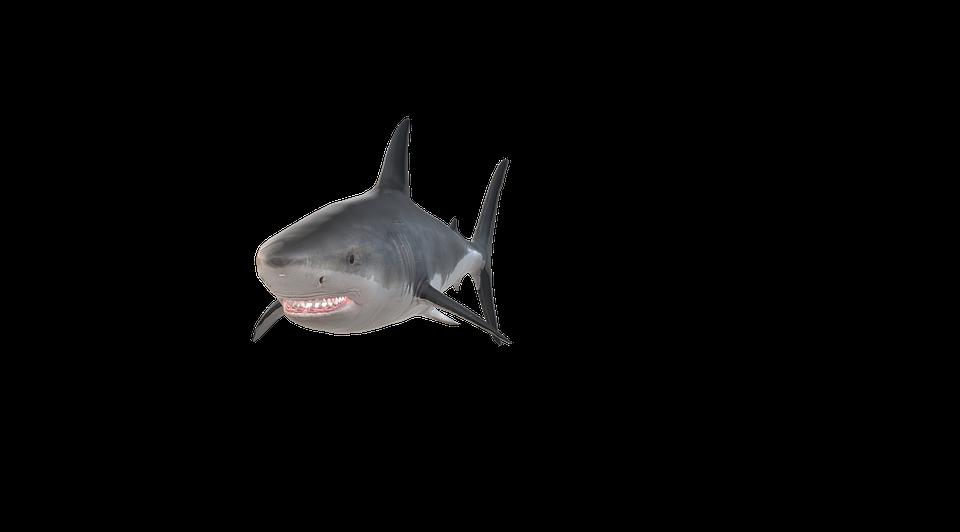 hai fish free image on pixabay hai fish free image on pixabay