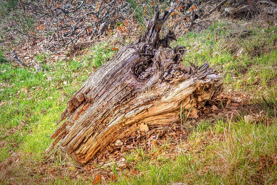 Holz Wurzel Baum Kostenloses Foto Auf Pixabay
