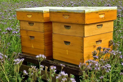 Beehive, Bees, Bee Keeping, Beekeeping