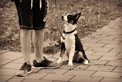 Cane, Animale, Animale Domestico, Uomo