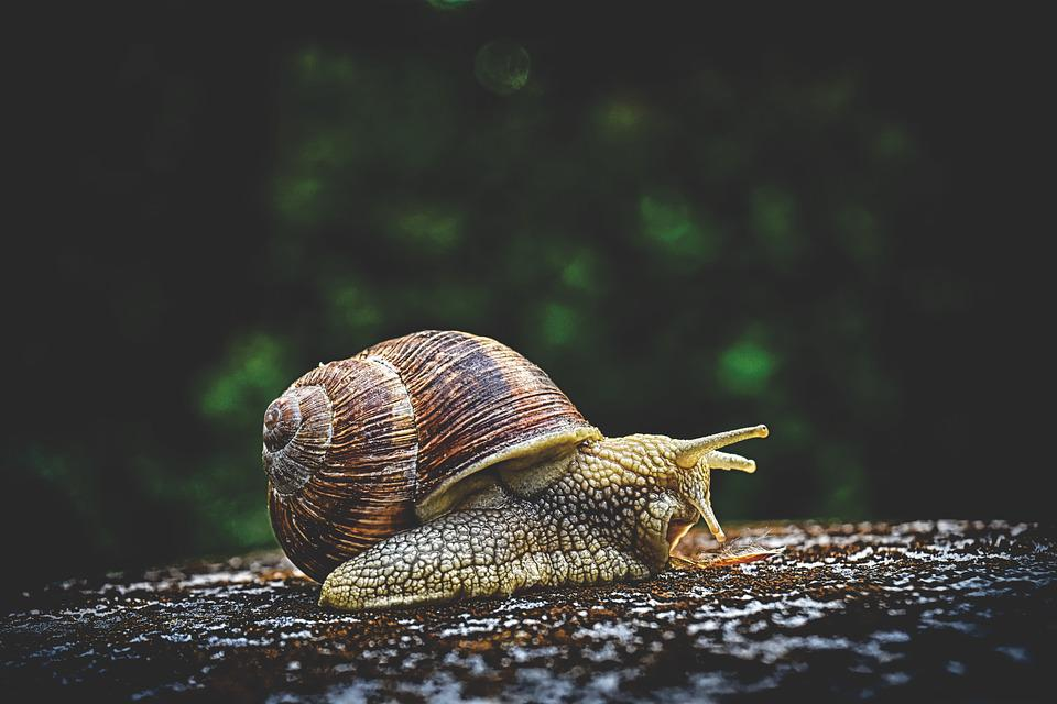 Snail, Animal, House, Crawl Space, Shell