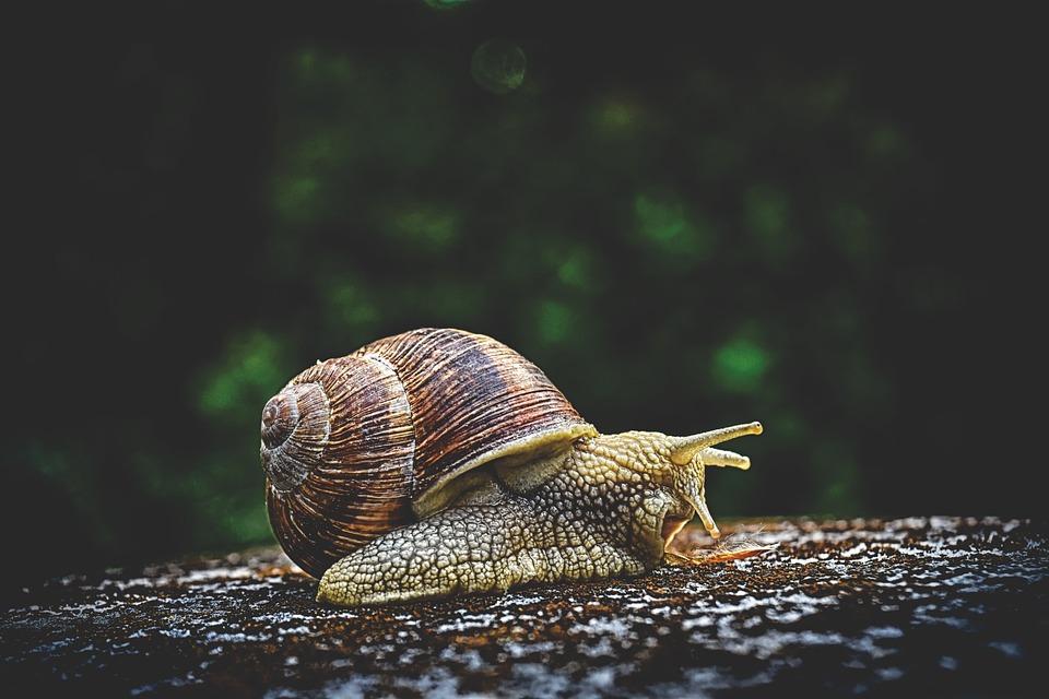 Slak, Dierlijke, Huis, Crawl, Shell