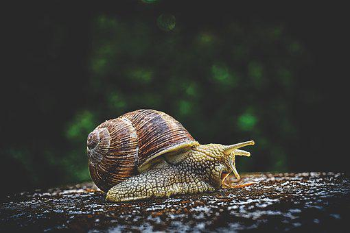 Snail, Animal, House, Crawl, Shell, Moving slowly, Living in the Present
