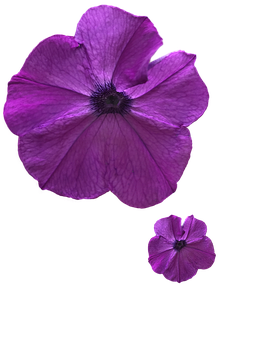 200 Best Free Lock Screen Wallpapers Hd Pixabay