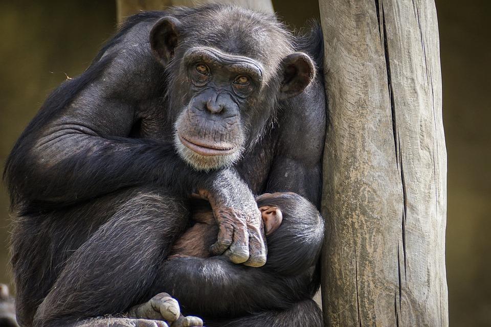 Самые необычные проявления любви в мире животных