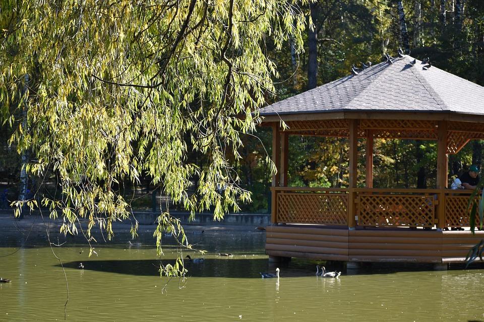Lake, Gazebo, Branch, Tree, Autumn, Novosibirsk, Zoo