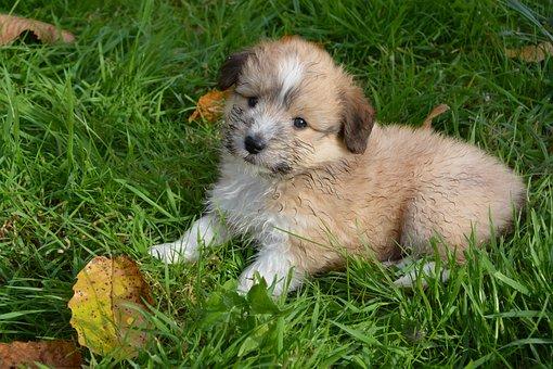 puppy-3709495__340.jpg
