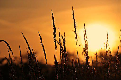 Sunrise, Grasses, Nature, Sky, Twilight