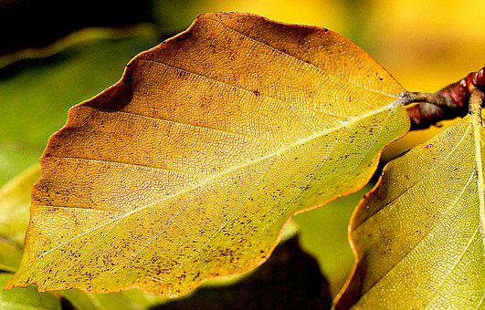 A close-up of a leaf that is just starting to turn yellow for the fall