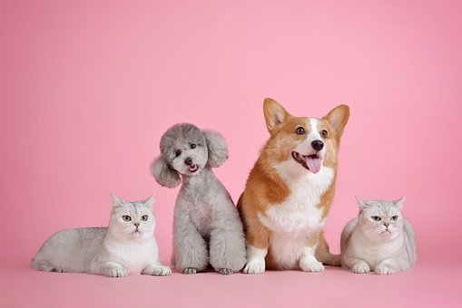 Different types of dogs and cats