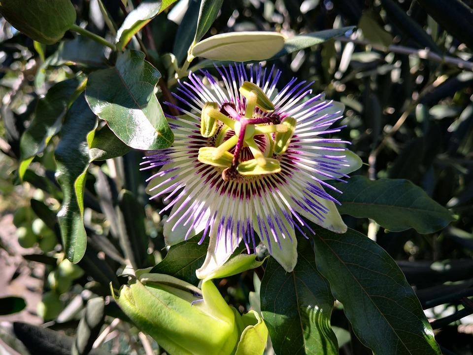 Plante Grimpante Plantes Fleur Photo Gratuite Sur Pixabay