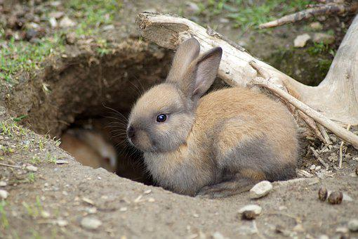 Rabbit, Cute, Baby, Hare, Pet, Easter