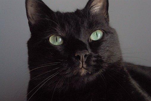 noir chatte gros plans pics galeries. de sexe anal