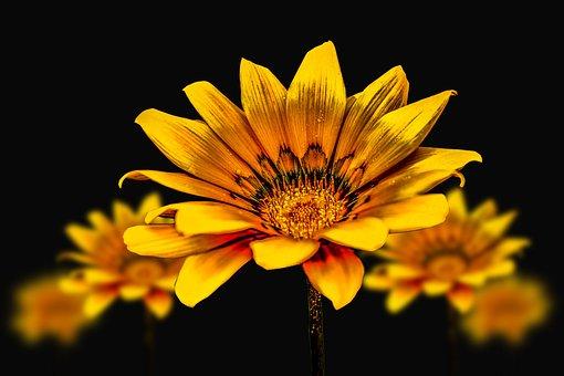 Flower Gérbel, Yellow Flower, Flower