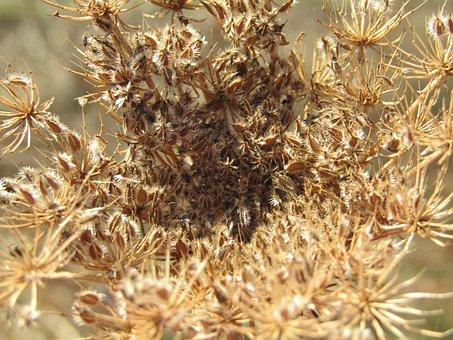 Dry Plant, Heatwave, Climate, Dead