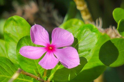 Flower, Plant, Nature, Bloom, Fuchsia