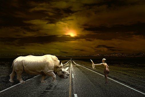 道路, パス, 友情, 動物, 男, サイ, 少年, 山, 光, 雲, 防御