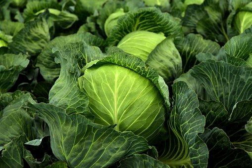 コール, ハーブ, キャベツ, 栽培, 野菜, 健康, ビタミン, 冬野菜