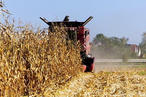 Мировой рынок зерна: биржевой подъем