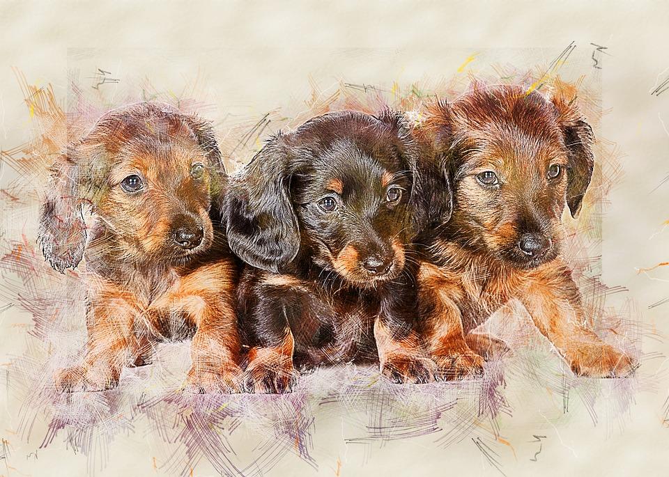 Dachs Hund Søt Gratis bilde på Pixabay