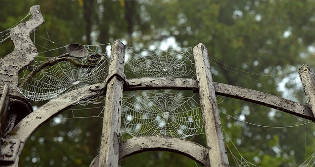 Halloween, Metal, Metal Gate, Spindelvæv