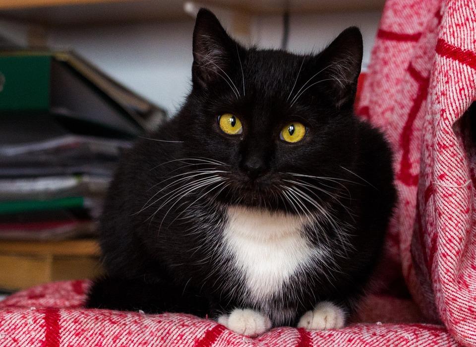 fotky z pekná čierna mačička