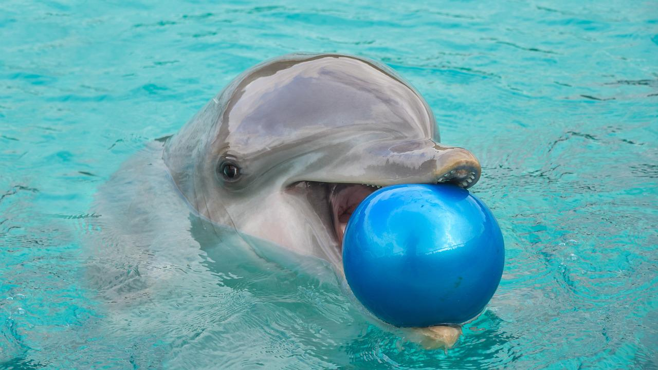 смешные фото с дельфинами супругом