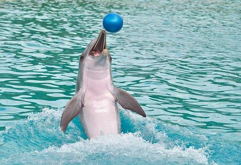 Dolphin, Ball, Play, Happy, Water