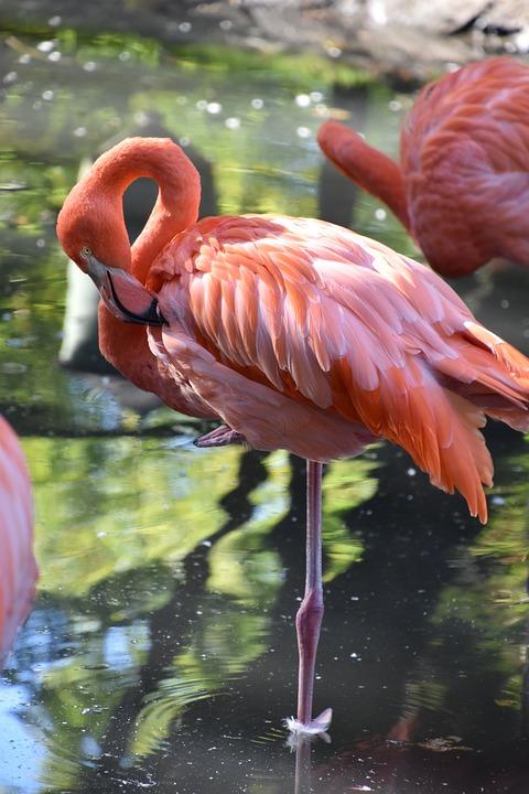 640+ Foto Gambar Burung Flamingo  Terbaru Gratis
