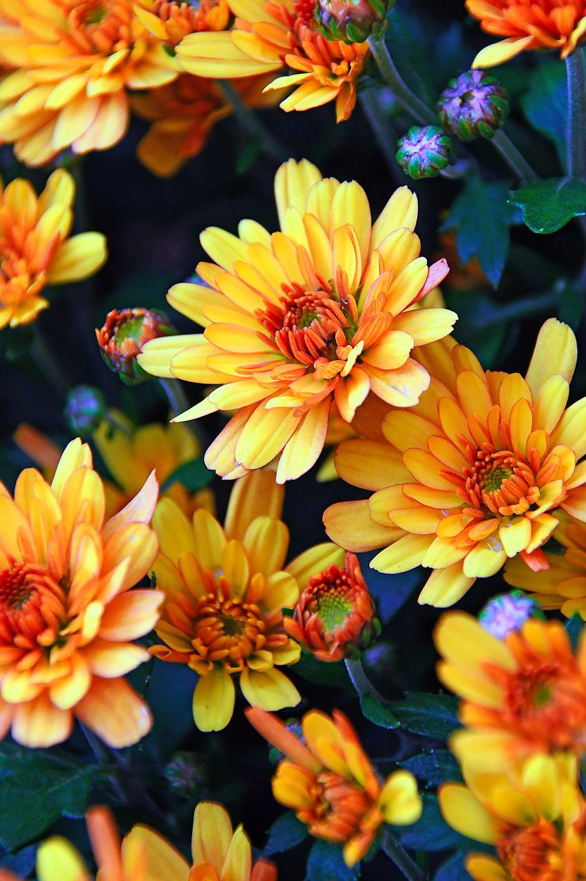 красивые осенние цветы картинки вертикальные центре