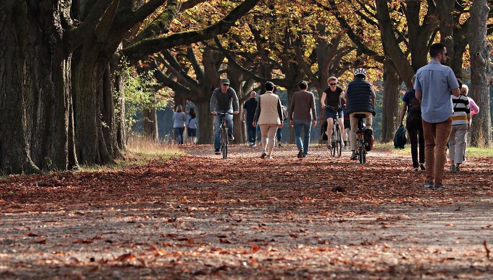 Musim Gugur, Taman, Outdoors, Alam, Pohon, Suasana