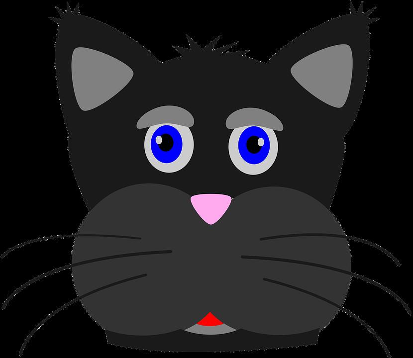 domáce čierna mačička