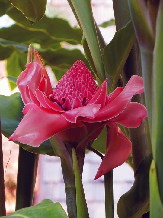 Exotiques Plantes Fleur Photo Gratuite Sur Pixabay
