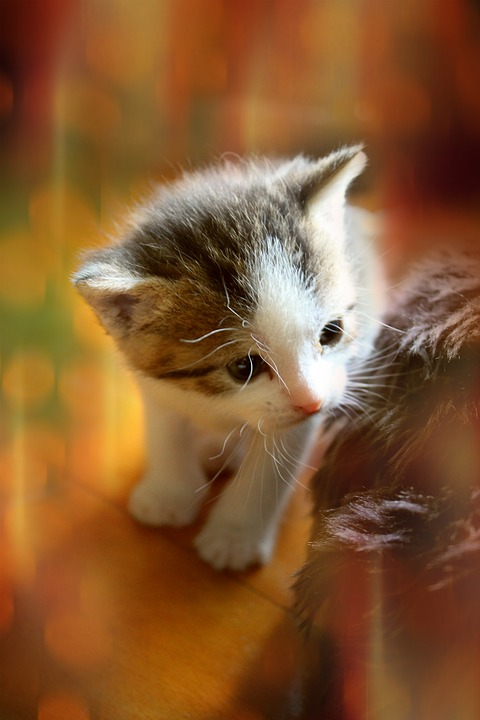 kitten animal cute cat baby baby cat small cats