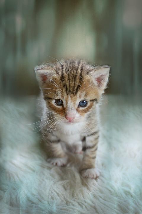 Kitten Animal Cute Cat , Free photo on Pixabay