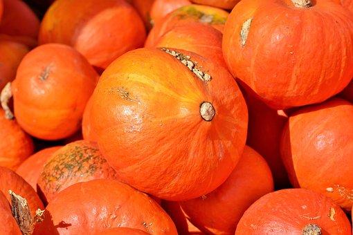 Pumpkin, Autumn, Harvest