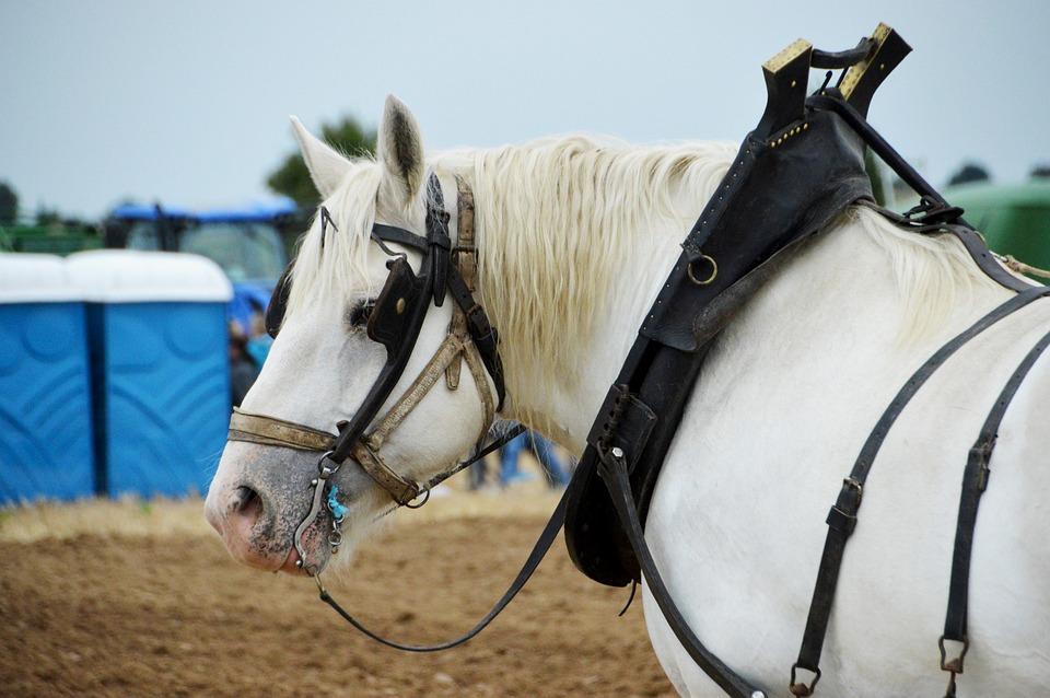 Horse A Workhorse Animal - Free photo on Pixabay