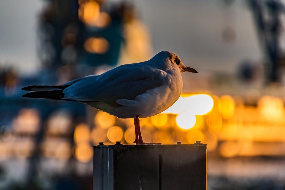 Möwe Hamburg Hafen Kostenloses Foto Auf Pixabay