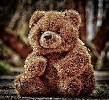 Furry Teddy Bear Images Pixabay Download Free Pictures