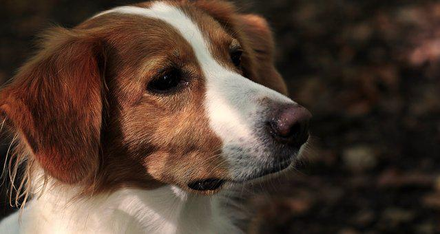 dog-3739225__340.jpg